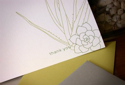 succulent note cards MStetson